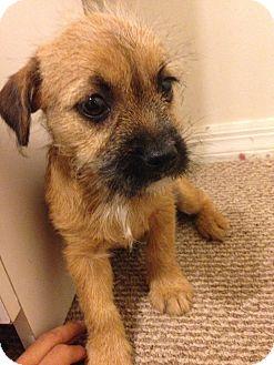 Pinecrest Fl Shih Tzu Meet Nala A Pet For Adoption