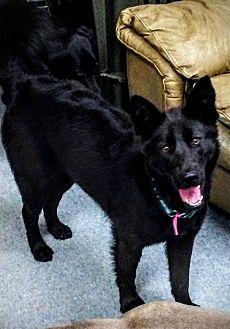 Adopt A Pet :: Ravn  - Anchorage, AK