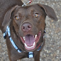 Adopt A Pet :: Tessa - Atlanta, GA