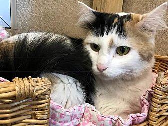 Adopt A Pet :: Jacinta  - Edmonton, AB