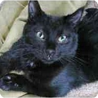 Adopt A Pet :: RoadRunner - Strathmore, AB