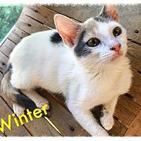 Adopt A Pet :: Winter MKK - Washington, DC