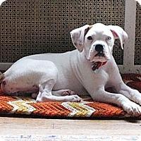 Adopt A Pet :: Rita - Hudson, NH
