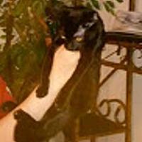 Adopt A Pet :: Quishi - Oviedo, FL