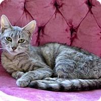Adopt A Pet :: Skittles - Poughkeepsie, NY