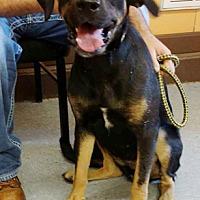 Adopt A Pet :: Gracie - Hillsboro, IL