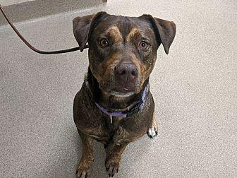 Adopt A Pet :: 19-0862  - Laramie, WY