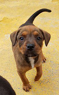 Adopt A Pet :: MAC  - Snow Hill, NC