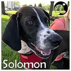 Midwest Beagle Rescue, Education and Welfare - Michigan in Novi