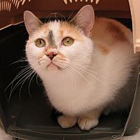 Adopt A Pet :: Grace - Wheaton, IL