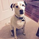 Adopt A Pet :: Kaya