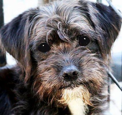 Wakefield Ri Miniature Poodle Meet