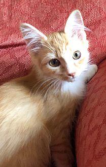 Adopt A Pet :: Sunshine  - Northwood, NH