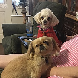 Schnauzer Miniature Puppies For Sale In Modesto California