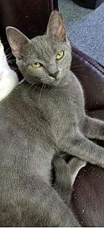 Adopt A Pet :: Empress  - Virginia Beach, VA