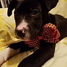 Adopt A Pet :: Rose Anna (see video)