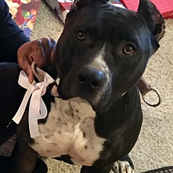Puppies for Sale in Riverside California - Adoptapet com