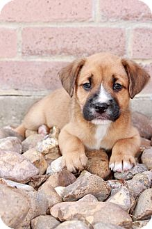 Find A Pet To Adopt Petsmart Charities