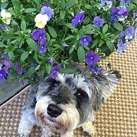 Adopt A Pet :: HEIDI (SRC#1904) in SC - Lenoir, NC