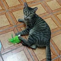 Adopt A Pet :: Lynnette - Delmont, PA