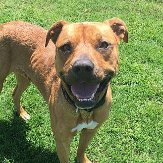 Adopt A Pet :: Carly  - Oklahoma City, OK
