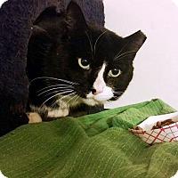 Adopt A Pet :: Santa - Putnam, CT