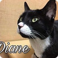 Adopt A Pet :: Diane - Island Heights, NJ