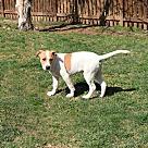 Adopt A Pet :: Tarragon