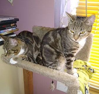 Adopt A Pet :: SB-Chip and Dale  - Devon, PA