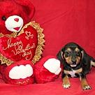 Adopt A Pet :: Rhett Butler