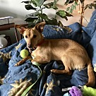 Adopt A Pet :: Diggy
