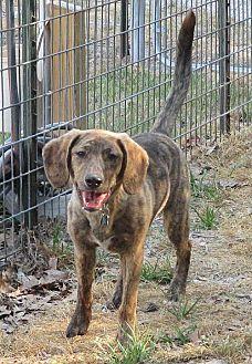 Adopt A Pet :: Justin  - Camden, SC