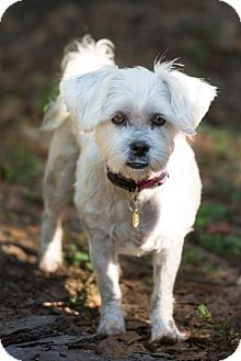 Tallahassee Fl Shih Tzu Meet Emmie Adopted A Dog For Adoption