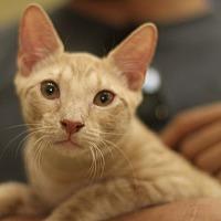 Adopt A Pet :: Munson - New York, NY