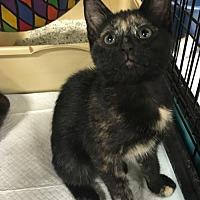 Adopt A Pet :: Lily - Boynton Beach, FL
