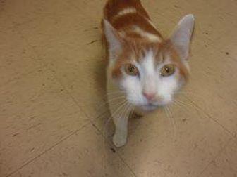 Adopt A Pet :: Barney  - Princeton, WV