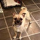 Adopt A Pet :: Bobo RBF