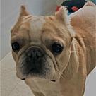 Adopt A Pet :: Obi Wan
