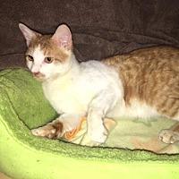 Adopt A Pet :: Patrick - Agoura Hills, CA