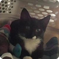 Adopt A Pet :: Kevianne - Freeport, NY