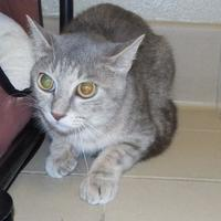 Adopt A Pet :: Mama Kitty - Jackson, MI