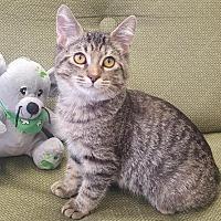 Adopt A Pet :: Melody - Saint Robert, MO