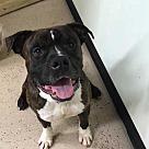 Adopt A Pet :: Tobin (Has Application)