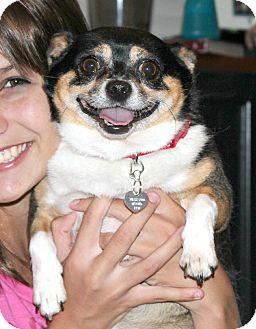 Wonderful Fluffy House Chubby Adorable Dog - 95153512  Pic_933574  .jpg