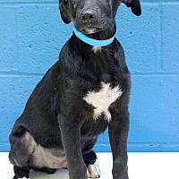 Adopt A Pet :: Vinny - Waldorf, MD