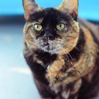 Adopt A Pet :: Minerva - New Freedom, PA