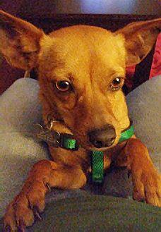 Adopt A Pet :: Rambo  - Camden, SC