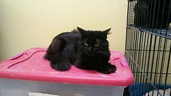 Adopt A Pet :: Gomez  - Mt Vernon, IN