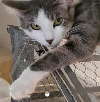 Adopt A Pet :: Peg  - Aurora, CO