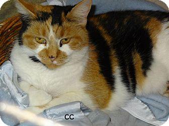 Calico Cat for adoption in Lapeer, Michigan - CC--URGENT! SWEET CALICO! FREE